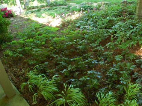 shade gardens zone 4 how to landscape a shady yard diy