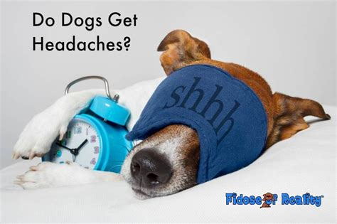 can dogs get headaches do dogs get headaches fidose of reality