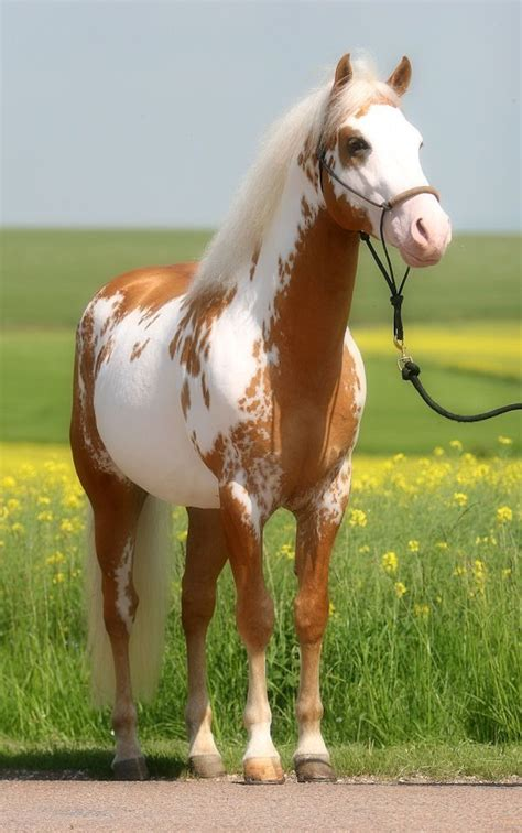 16 Gorgeous Pictures Of Horses by Best 25 Breeds Ideas On Pretty