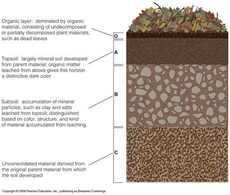 soil horizons diagram http morriscourse elements of ecology images soil