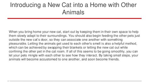 introducing a new cat into a home with other animals