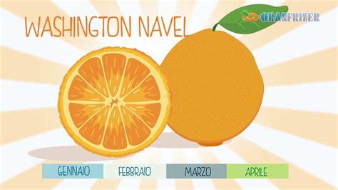 giardino delle arance il giardino delle arance le variet 224 di arance bionde e