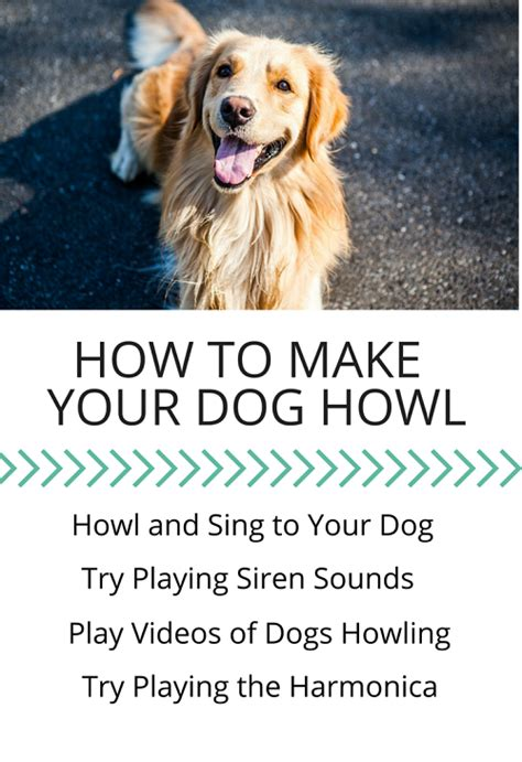 what do i need to build a dog house dog howling 5 easy ways to make your dog howl puppy leaks