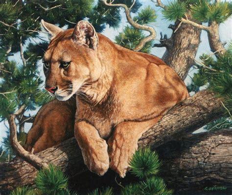 imagenes de leones y gatos cuadros pinturas oleos pinturas de leones y gatos