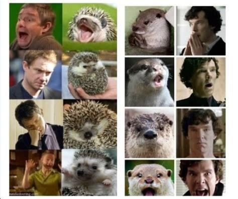 Benedict Cumberbatch Otter Meme - my secret cumberporn hoard