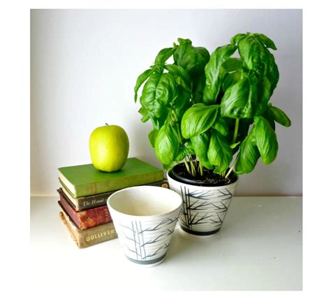 the best indoor plants for small spaces tiny living ingredients of best potting soil for home gardens homesfeed