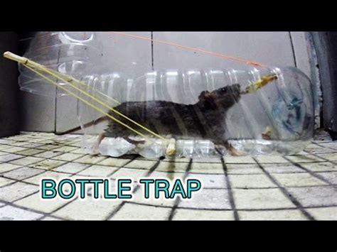 cara membuat jebakan tikus botol cara membuat jebakan tikus dari botol bekas air mineral