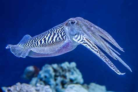 Do You Really Know ALL the Different Types of Squids? We ...