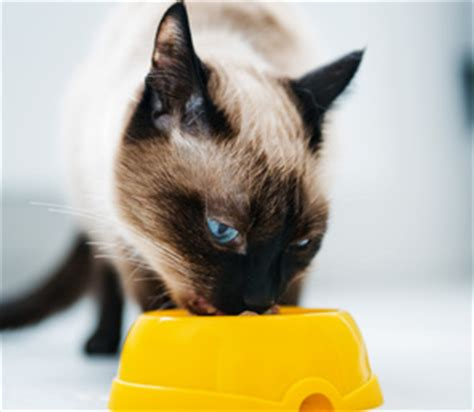 cat care services pawgeous pooches