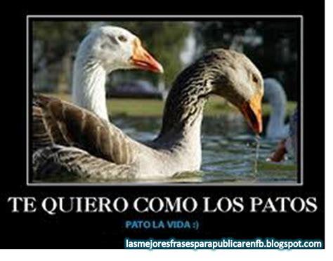 imagenes te quiero como los patos las mejores frases para publicar en fb frases de amor te