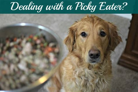 how to get a puppy to eat how to get a picky to eat tips tricks and tools