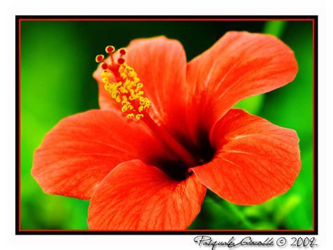 fiori colori fiori e piante di mille colori foto immagini piante
