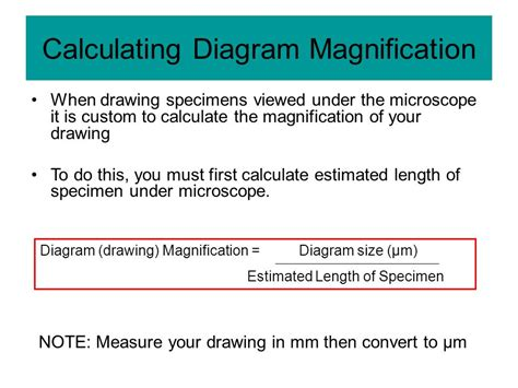 how do you measure light parts of a light microscope ppt video online download
