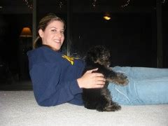 yorkie poo seattle travsite yorkie poo puppy pictures page 3