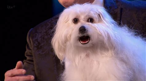 talking puppy britain s got talent 2015 s09e01 marc m 233 tral with his hilarious talking singing