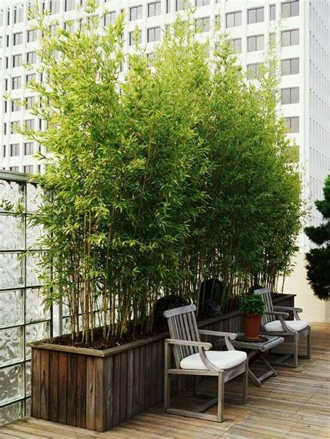 keeping bamboo in pots for privacy screen