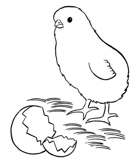 coloring page baby chick chick coloring pages az coloring pages