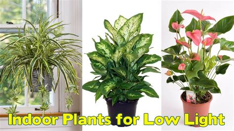 plants that do well in low light 25 indoor plants for low light youtube