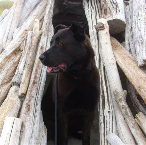 rocky mountain puppy rescue rocky mountain animal rescue vegan traveler reviews vegan travel