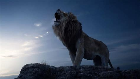 lion king  wallpapers backgrounds