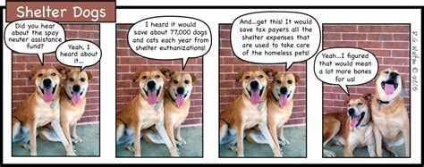 average cost of neutering a news foho wv