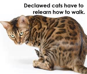 Pros And Cons Of Cats Declawing Cats How To When Pros And Cons Alternatives