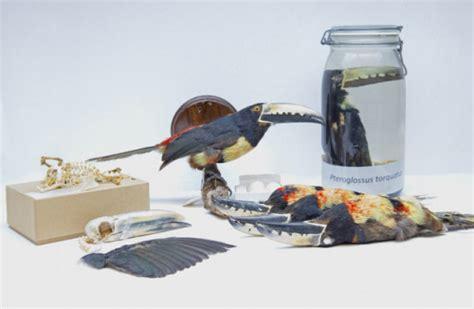 specimen preservation carnegie museum of natural history
