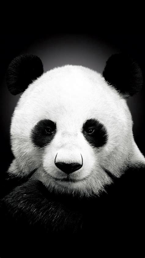 wallpaper iphone panda black and white panda iphone 7 and 7 plus wallpapers hd