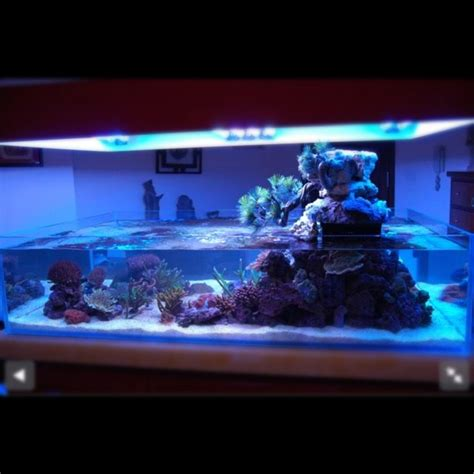 design marine aquarium reef aquarium saltwater fish blue planet pinterest