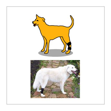 puppy limping back leg orthodog hock holder canine hock brace for dogs with weak ankles or hind leg