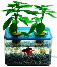 Water reservoir fish tank nutrition fish poop