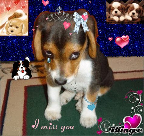 i miss you puppy miss you picture 104979456 blingee