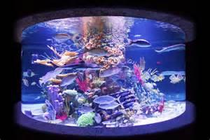 Coral Reef Aquarium: Artificial Coral Reef Aquarium Decoration Inserts