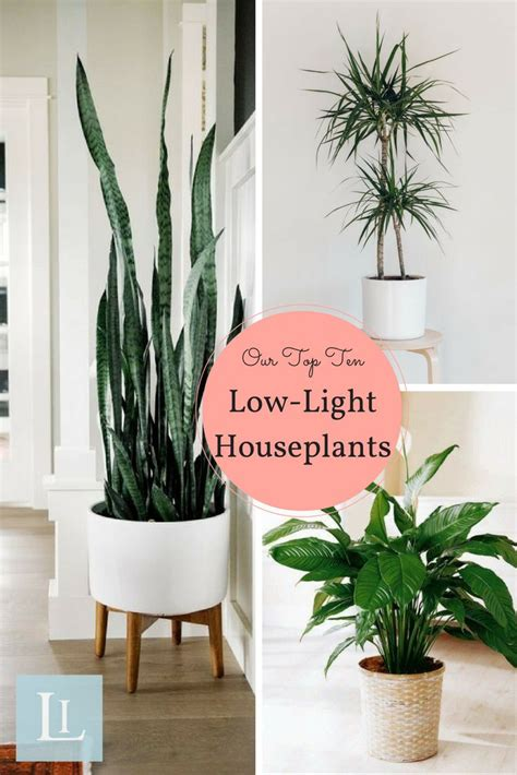 Planting The Chic In Cheap by Houseplants That Don T Need Sunlight Best Living Room