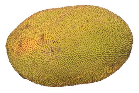 png image jackfruit png image pngpix
