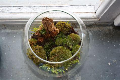 moss terrarium care learn how to make moss terrariums