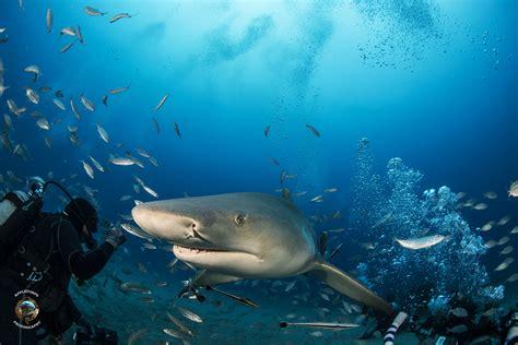 Vulcan Sleeper Hold by Shark Rescue