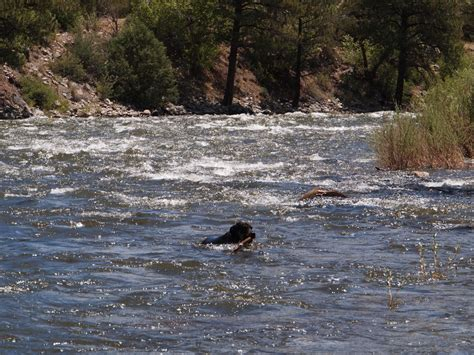 asleep at the wheel dusty skies mix ride report braving silver creek s charms in salida