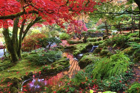 the fall in the garden of butchart gardens fall colours 0y4o1841 the reds in