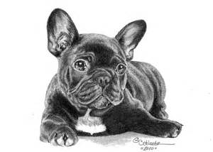 the french bulldog pup drawing by genevieve schlueter