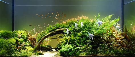 Aquascape Contest by Aquagalaxy Pro Contest 2013 Aquascaping World Forum