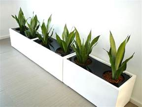 large indoor plant pots melbourne indoor planters