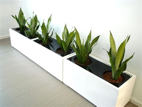 Planter Indoor by Large Indoor Plant Pots Melbourne Indoor Planters Melbourne