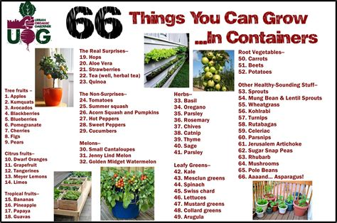 Things To Plant In A Vegetable Garden Support Black Farmers 66 Plants You Can Grow In Containers