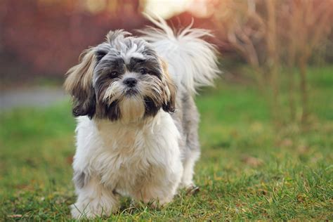 best breeds for what are the best breeds for matttroy
