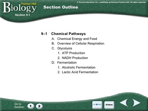 section 9 1 chemical pathways section 9 1 chemical pathways 28 images section 9 1