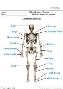 the skeletal system worksheet answers abitlikethis