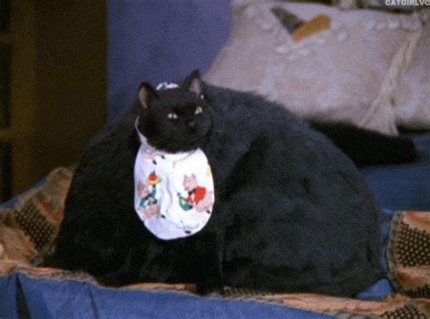 Sabina Cat Food cat gif find on giphy