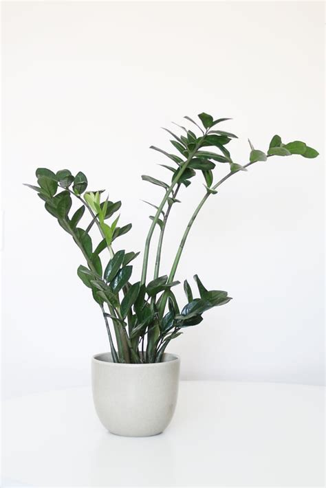 houseplants   light popsugar home