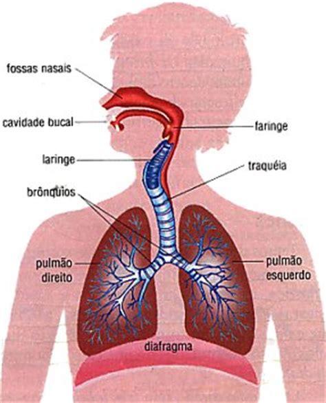 imagenes del sistema respiratorio ingles sistema respirat 243 rio 211 rg 227 os e anatomia humana infoescola